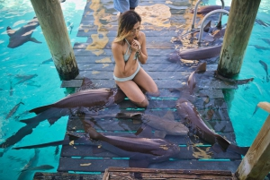 Tour From Nassau: Exuma Swimming Pigs, Sharks and More