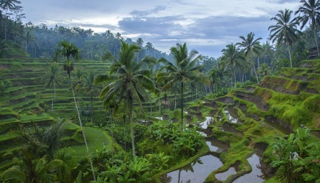 7 Choices of Full Day Bali Tours