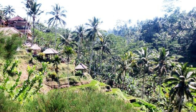 Renewing the Resources of Bali