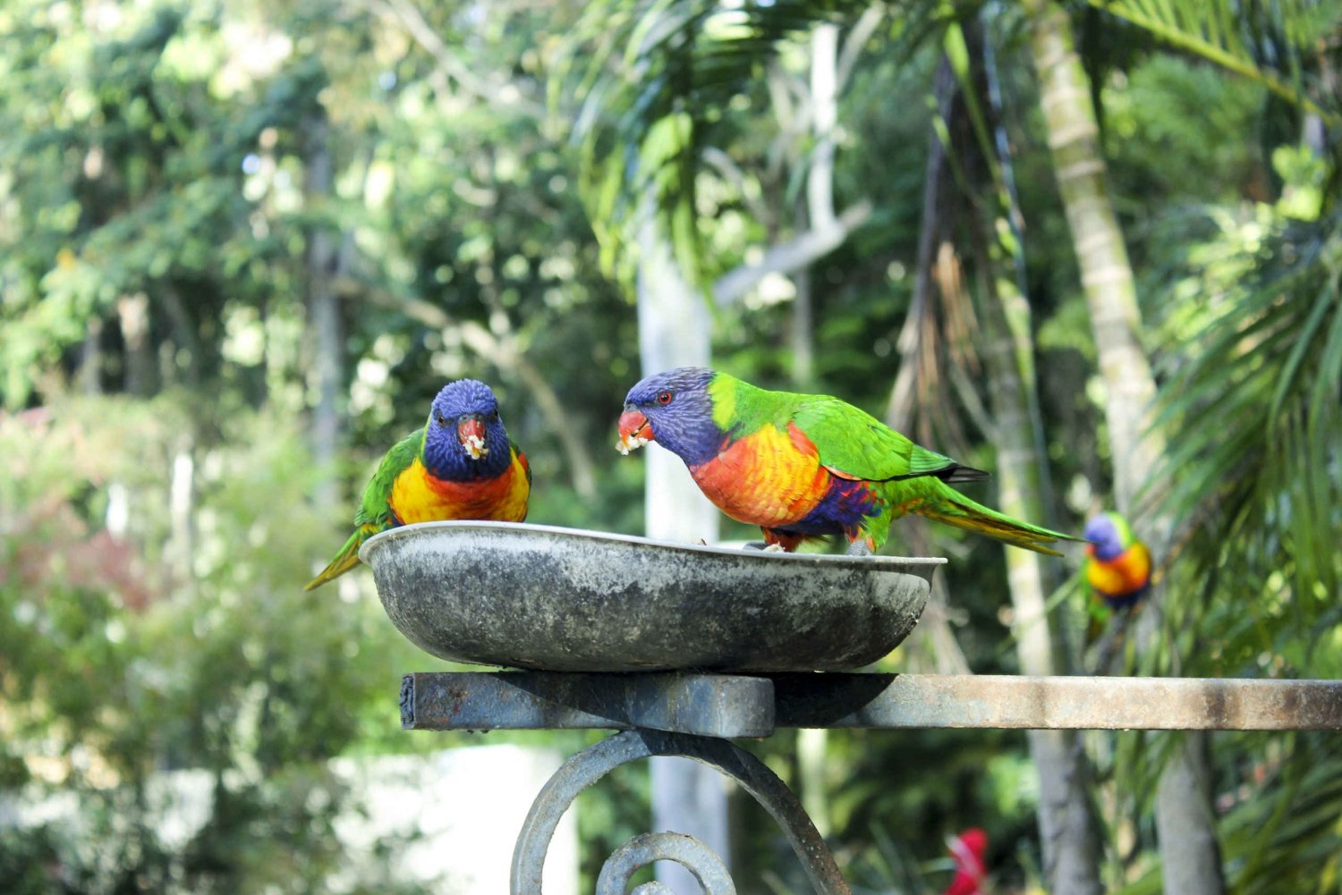 Bali Bird Park 1-Day Admission Ticket