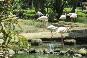 Bali Bird Park 1-Day Admission Ticket