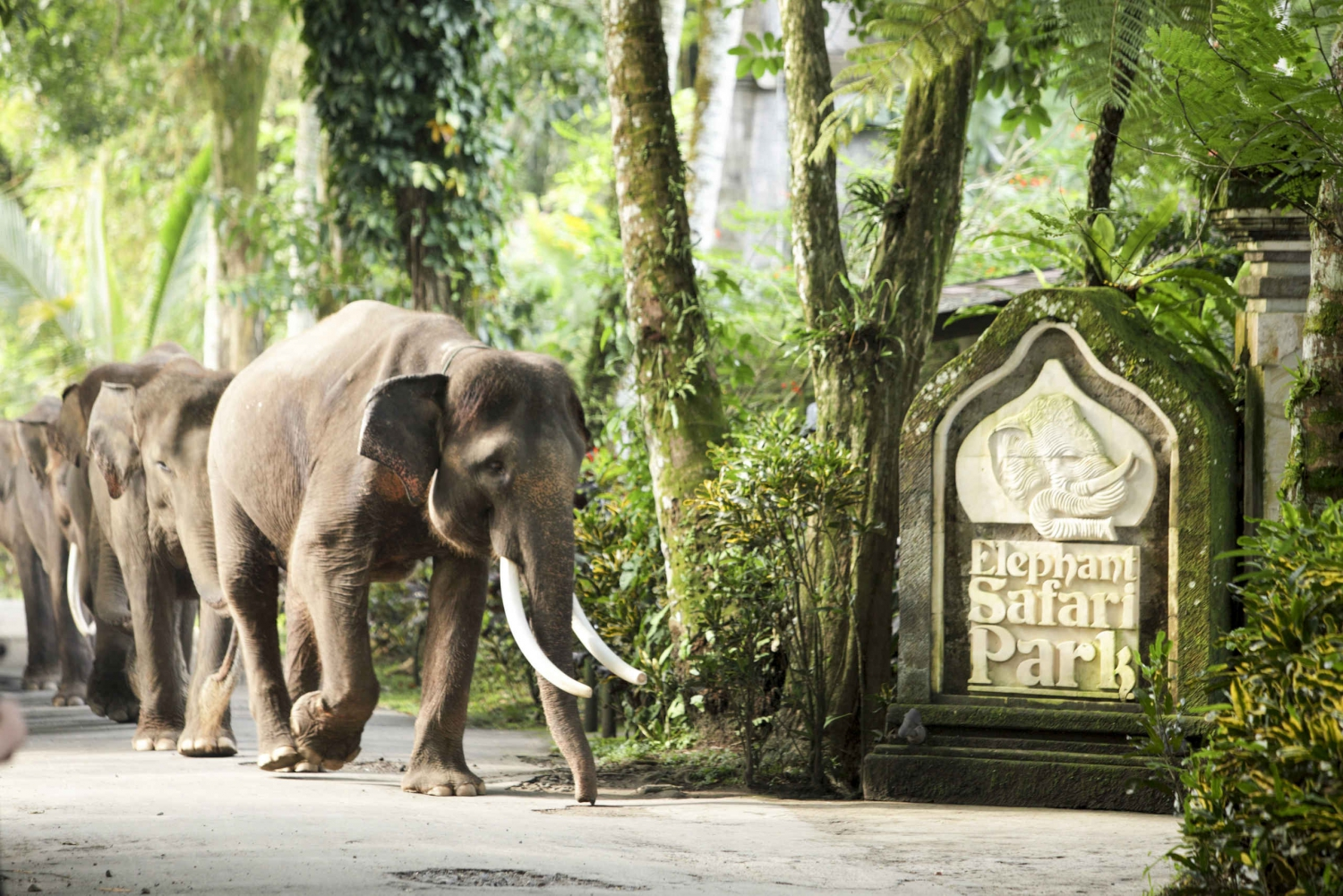 Bali Elephant Safari Park: Instant E-Ticket Entry