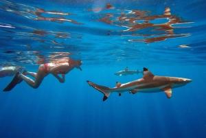 Bali: Swim with Sharks & Dreamland Beach