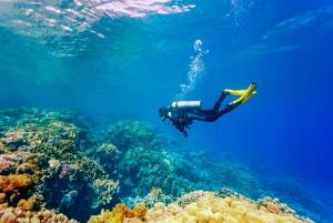 Bali: Tulamben Bay Beginner's Dive Experience
