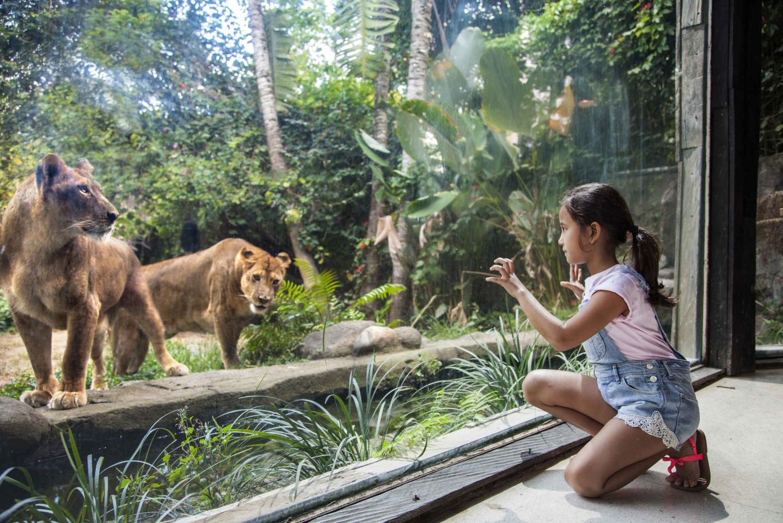 Bali Zoo Entrance Ticket