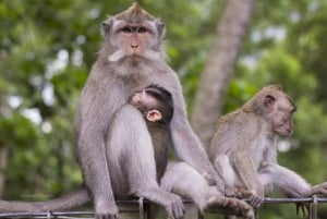 Best of Ubud: Waterfall, Rice Terraces & Monkey Forest