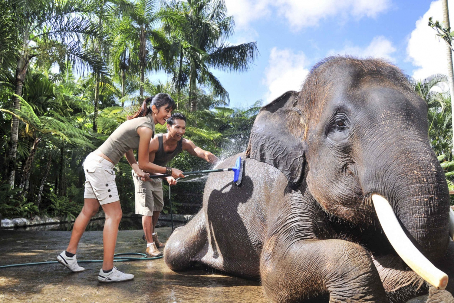 Breakfast and Bathing with Elephants