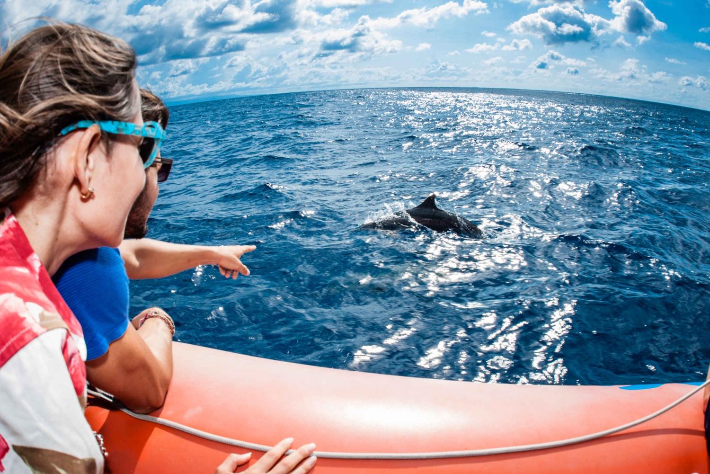 Dolphin Spotting Cruise