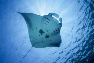 From Bali: Swim with Manta Rays in Nusa Penida