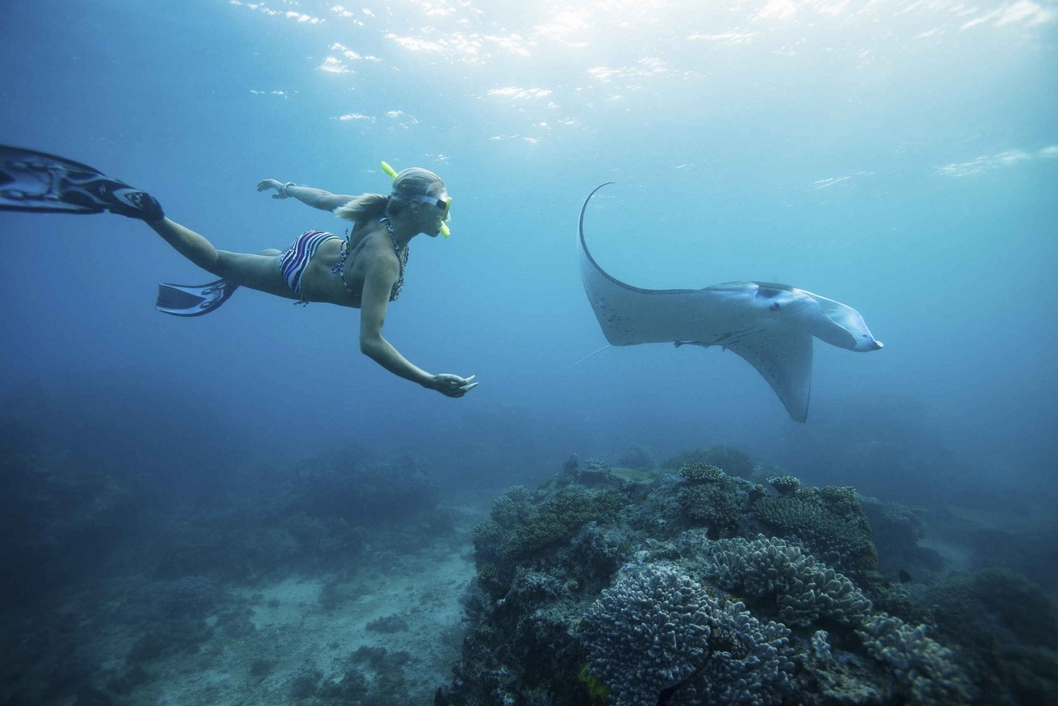 From Swim with Manta Rays in Nusa Penida