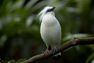 Full-Day Bird Watching Experience