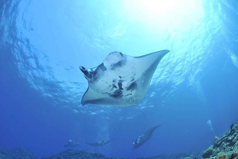 Full-Day Snorkeling Trip to Nusa Penida & Manta Point