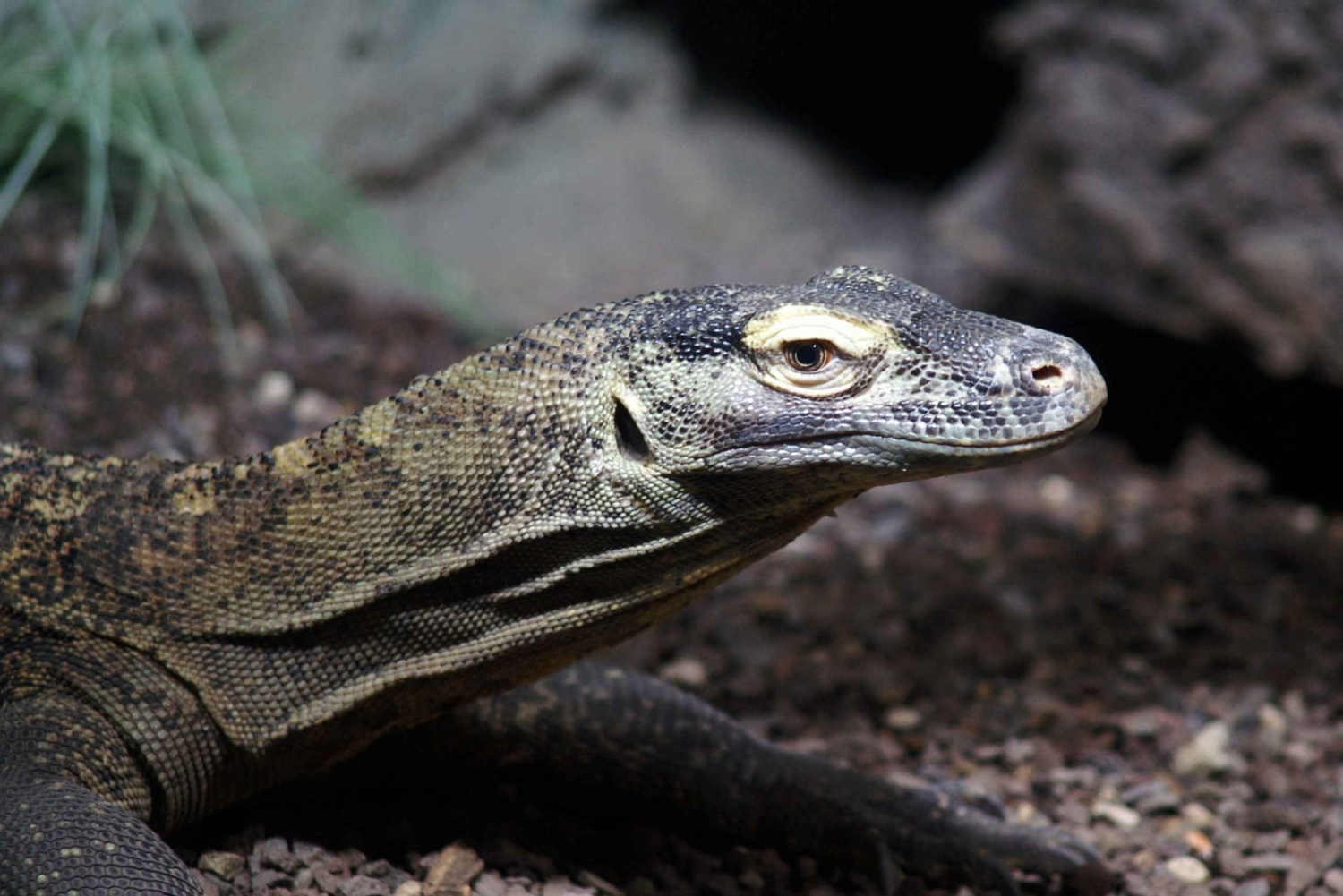 Komodo Islands: 2-Day Adventure with Phinisi Boat Stay