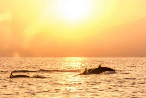 Lovina: Sunrise Dolphin Watching Small Group Tour