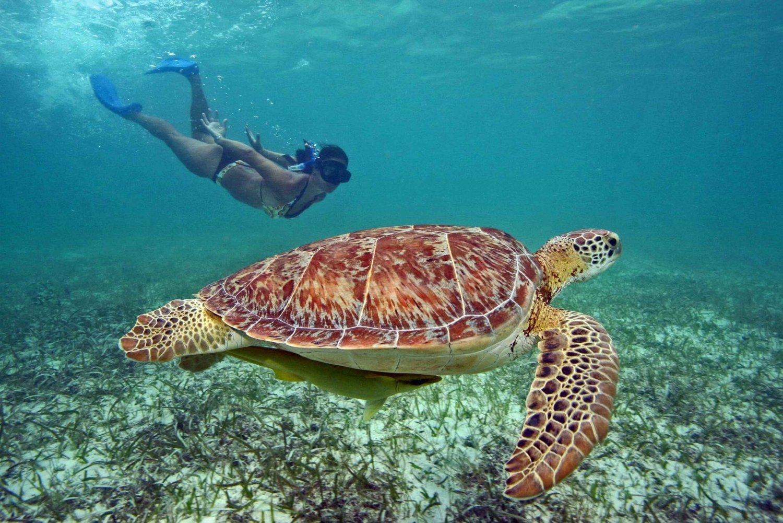 Swim with Turtles: 3-Day Gili Islands Journey