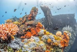 Tulamben: USAT Liberty Shipwreck Full-Day Snorkeling Trip