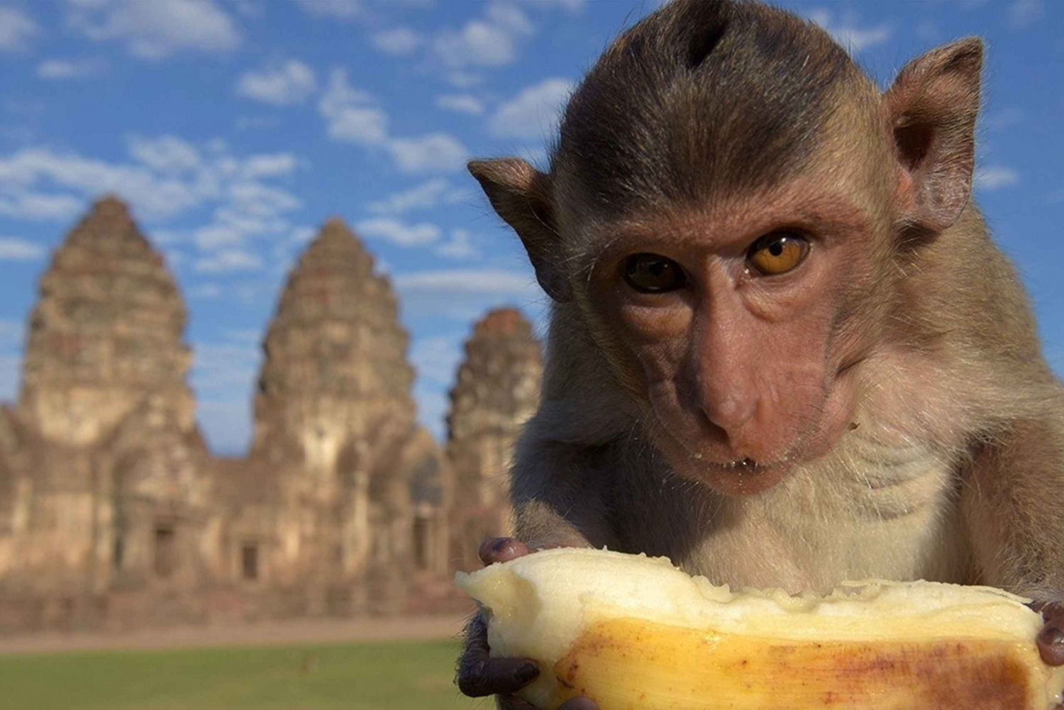 Ayutthaya & Lopburi Monkey Temple Private Day Trip
