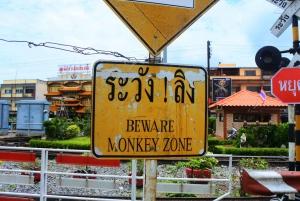 Bangkok: Private Car Hire to Lopburi the Monkey City