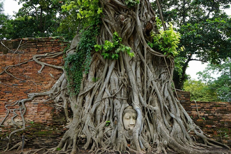 From Ayutthaya & Khao Yai National Park Day Trip