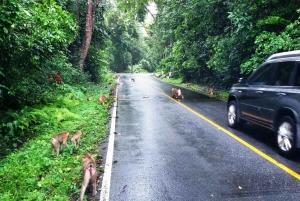 From Bangkok: Ayutthaya & Khao Yai National Park Day Trip