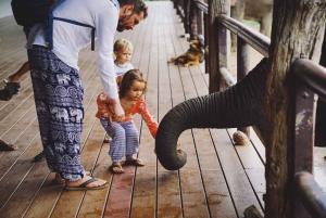 From Bangkok: ElephantsWorld Kanchanaburi 2-Day Experience