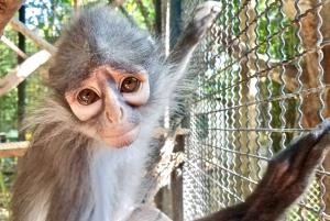From Bangkok: Wildlife Rescue and Elephant Rescue Tour