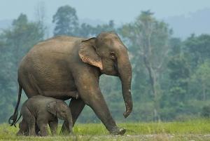 From ElephantsWorld Kanchanaburi 2-Day Experience