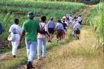 BNT Hike Barbados Programme 2017 - May