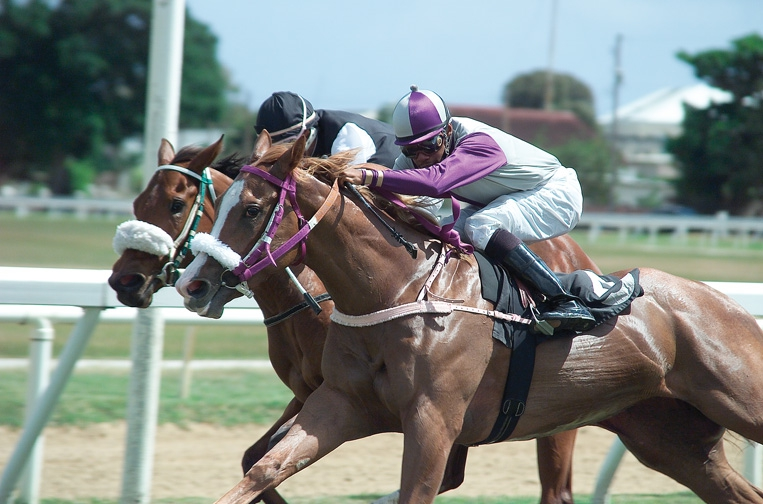 Horse Racing at the Garrison - June 2019