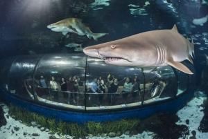 Barcelona: Hop-On Hop-Off Bus & Aquarium Tour