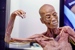 Barcelona: Human Bodies Exhibition with Audioguide