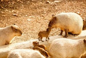 Barcelona Zoo Tickets