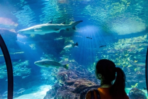 From Costa Brava: Barcelona Excursion and Aquarium