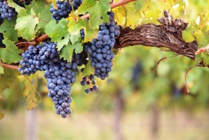 Private Full Day Tour To Three Wineries In A Day With Lunch