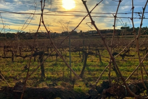 Wine and Cava Tasting & Human Towers Tradition Day Tour