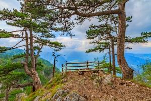 From Tara National Park & Drina River Valley Tour
