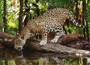 Agua Caliente Luha Wildlife Sanctuary