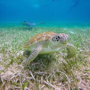 Belize Pro Dive Center