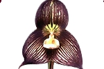 Black Orchid Restaurant & Lounge