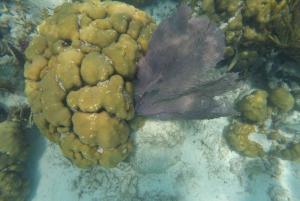 Caye Caulker: 7-Stop Snorkeling in the Belize Barrier Reef