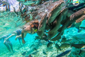 Caye Caulker: Hol Chan Marine Reserve Small-Group Tour