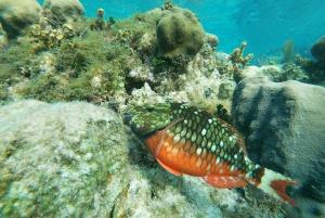 Caye Caulker: Local Reef Half-Day 3-Stop Snorkeling Tour