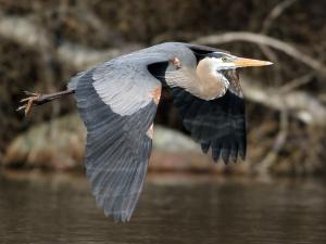 Gales Point Wildlife Sanctuary