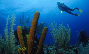 Glover Reef