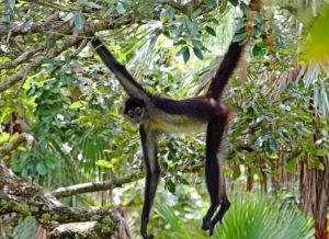 Monkey Bay National Park