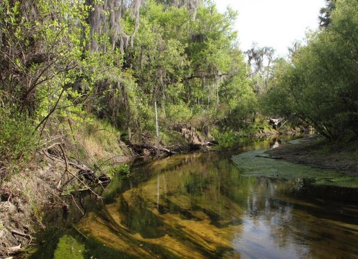 Payne's Creek National Park