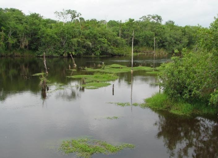Rio Bravo Conservation and Management