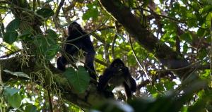 Swasey Bladen Forest Reserve