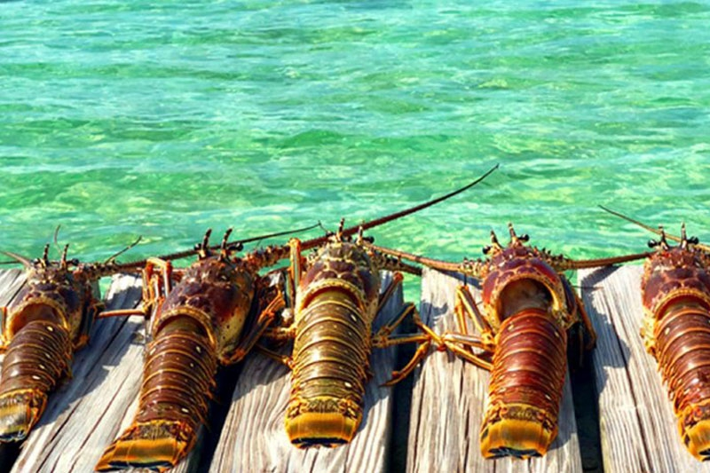 Belize Lobster Festivals