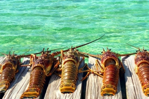 Belize Lobster Festivals